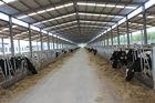 Автоматизация и санитарные Pre-сделанные системы стального структурного Cowshed обрамляя